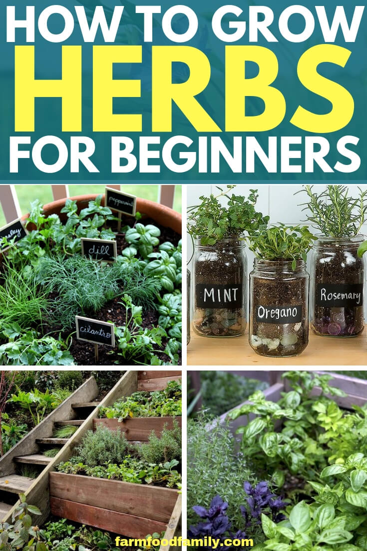 How to grow herbs fro beginners