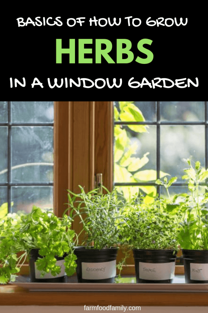 Beginning an Indoor Herb Garden: Basics of How to Grow Herbs in a Window Garden