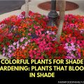 Colorful Plants for Shade Gardening: Plants That Bloom in Shade