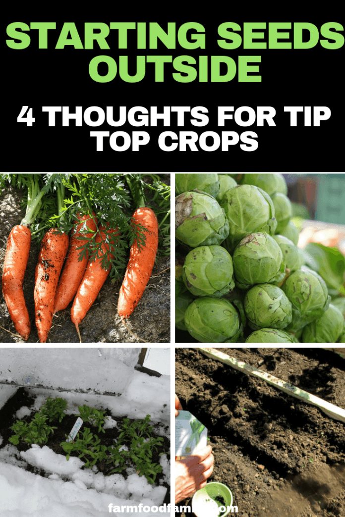 Starting Seeds Outside?  4 Thoughts for Tip Top Crops