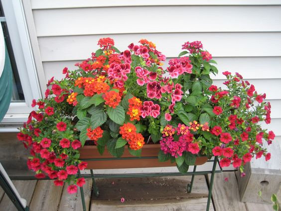 Container Planting | Flower Garden Ideas for Containers and Windowboxes