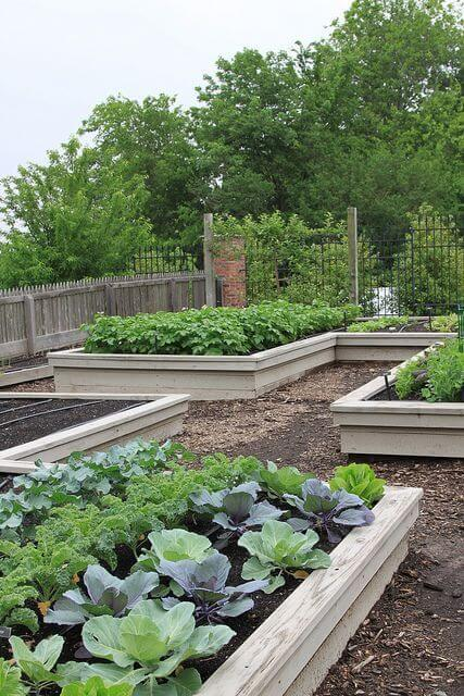 Raised Bed Kitchen Garden