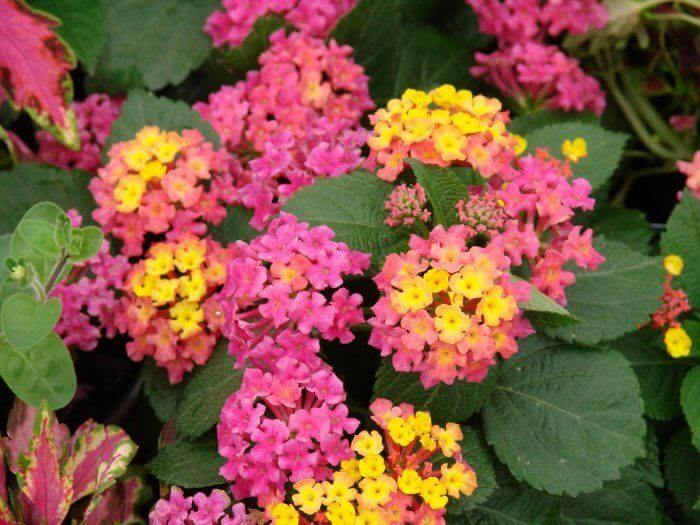 Anne Marie | Drought Tolerant Plants Attracting Pollinators: Try Xeriscape Gardening and Attract Bees Butterflies Hummingbirds