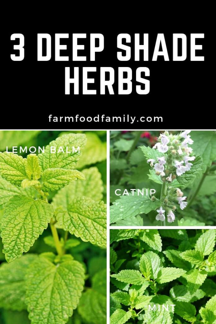 Deep Shade Herbs