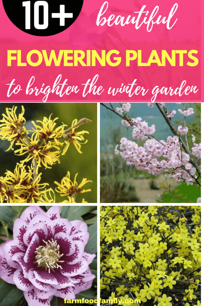 Trees, Shrubs and Perennials with Blooms to Sparkle in Short Days