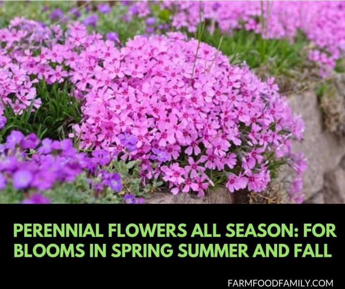 Perennial Flowers All Season: Perennial Garden Design Guide for Blooms in Spring Summer and Fall