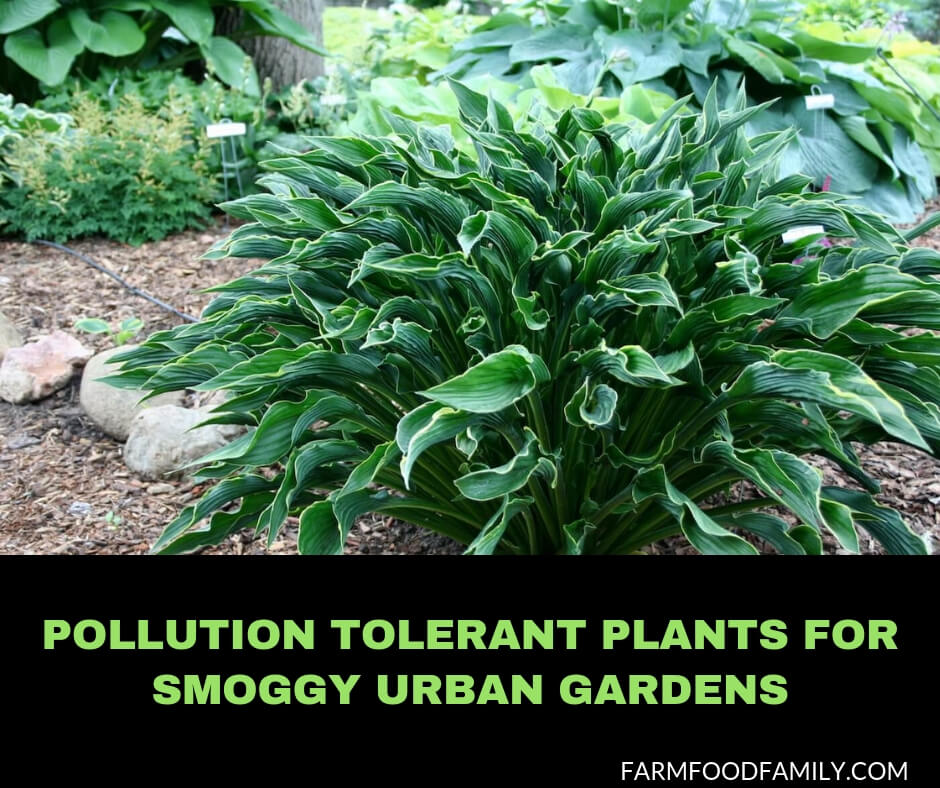 5 Best Pollution Tolerant Plants For Smoggy Urban Gardens