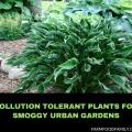 Pollution Tolerant Plants: Perennials and Annuals for Smoggy Urban Gardens