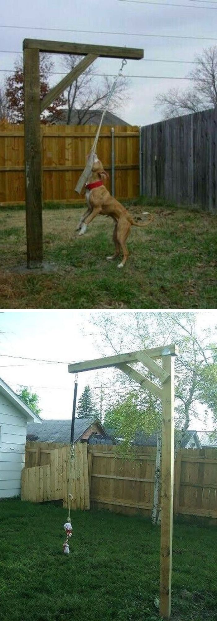 10+ Great Dog-Friendly Landscaping Ideas - FarmFoodFamily