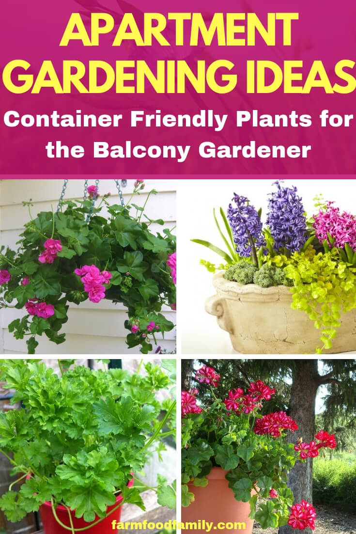 Apartment Gardening Ideas: Container Friendly Plants for the Balcony Gardener