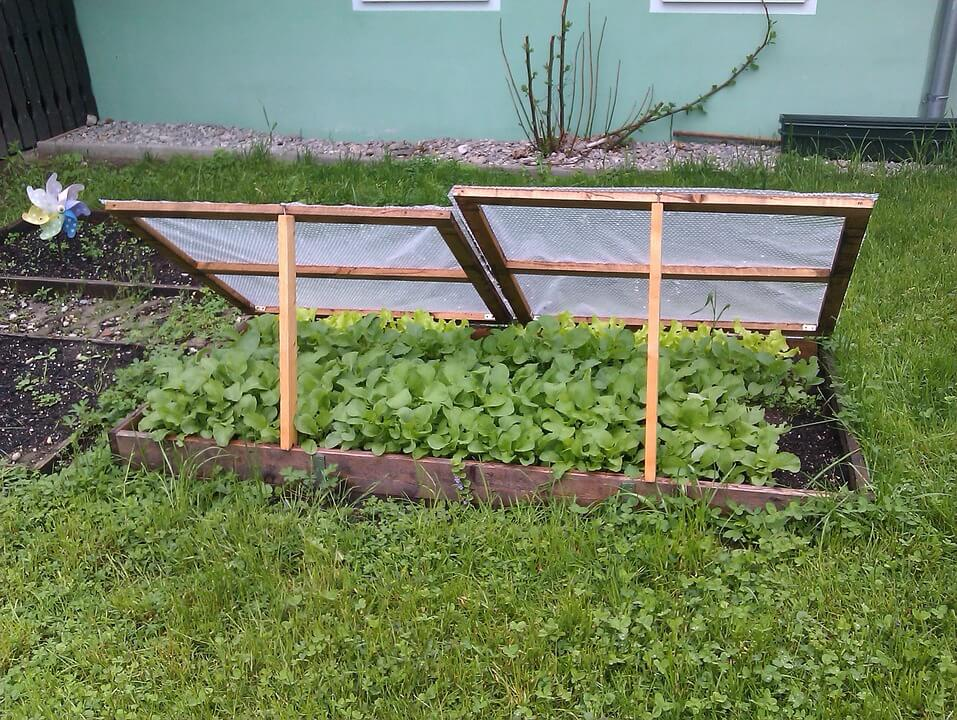 Protection for Winter-Sown Garden Plants