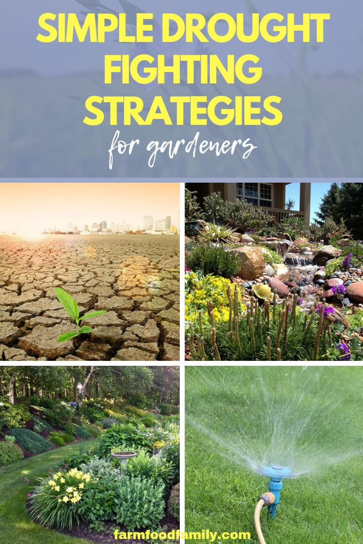 Simple Drought Fighting Strategies for Gardeners