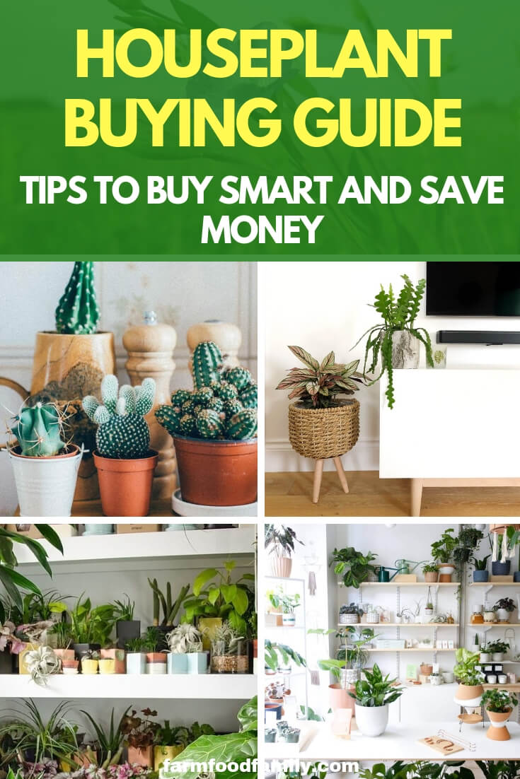 Houseplant Buying Guide: Tips to Buy Smart and Save Money