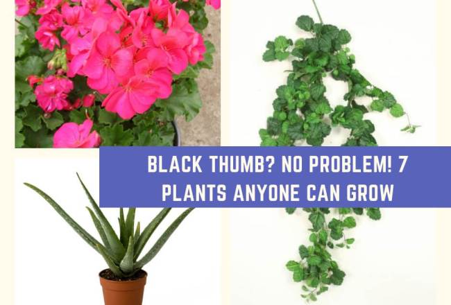 Black Thumb? No Problem! 7 Plants Anyone Can Grow