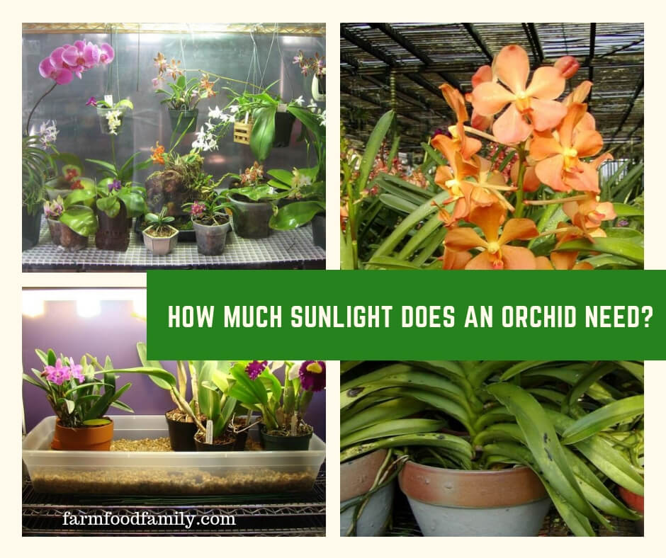 Orchid plant care how much sunlight does an orchid need for How much sun does a garden need