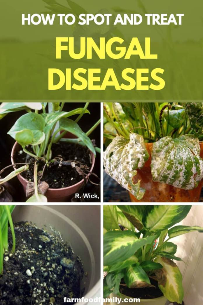 How to Spot and Treat Fungal Diseases
