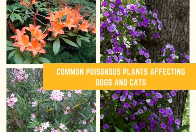 Common Poisonous Plants Affecting Dogs and Cats