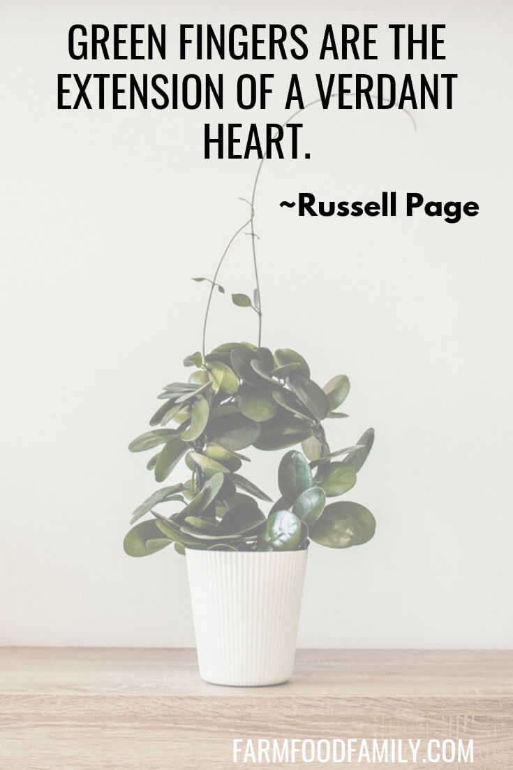 16 Quotes for Houseplant Lovers (Indoor Gardening)