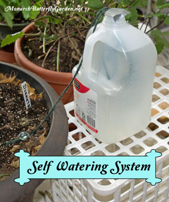 Self Watering System Indoor