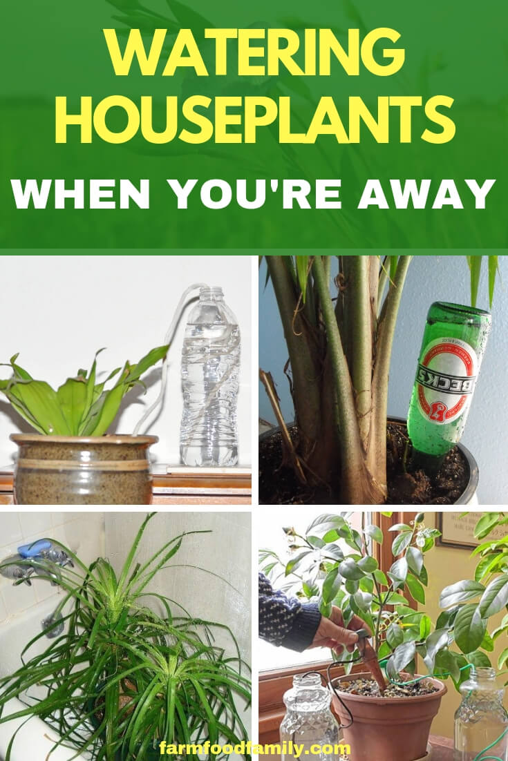 Preparing Houseplants for Vacations, Holidays, and Trips