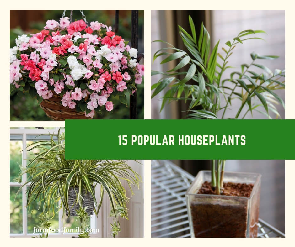 Names of 15 Common Houseplants With Pictures
