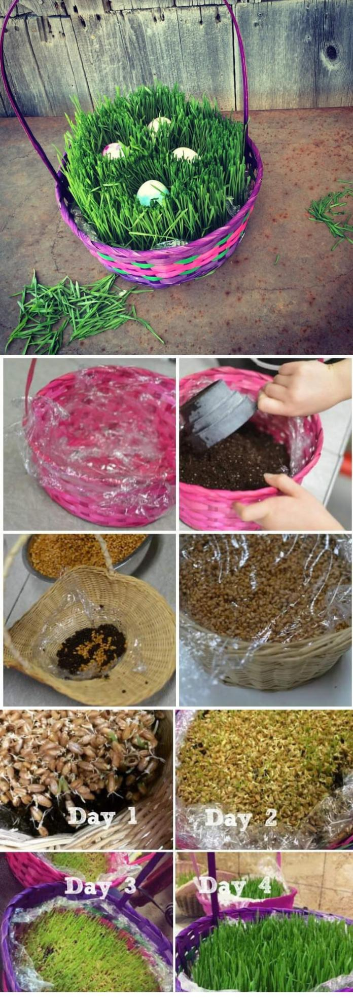 Grow Your Own Easter Basket Grass | Creative Easter Garden Projects & Ideas Your Kids Will Love