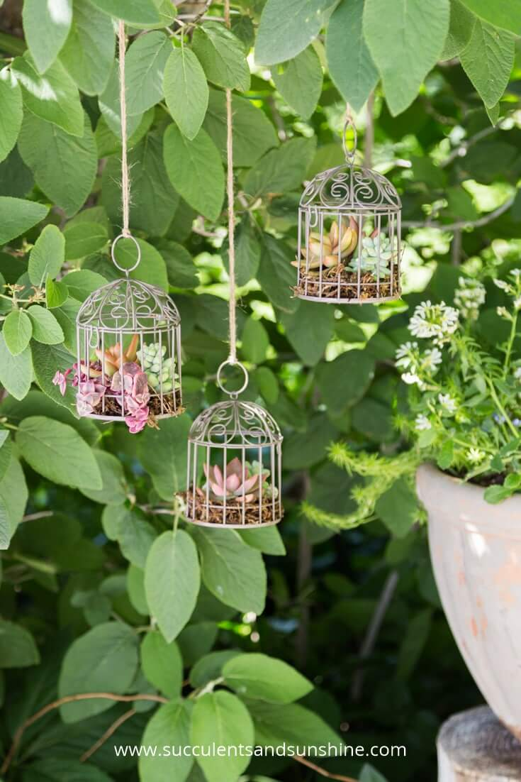 Succulents in Miniature Bird Cages