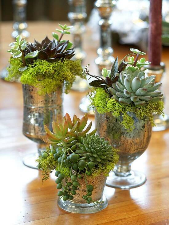 Succulents in mercury glass holders | Best Farmhouse Indoor Plant Decor Ideas & Designs