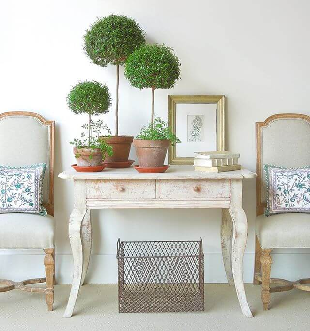 Myrtle Topiaries | Best Farmhouse Indoor Plant Decor Ideas & Designs