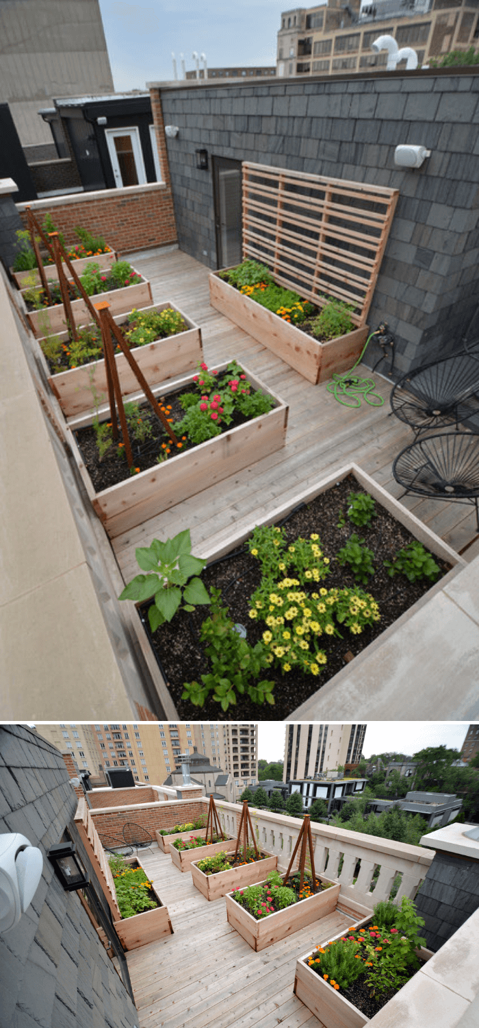 A mid-sized modern full sun rooftop landscaping with decking