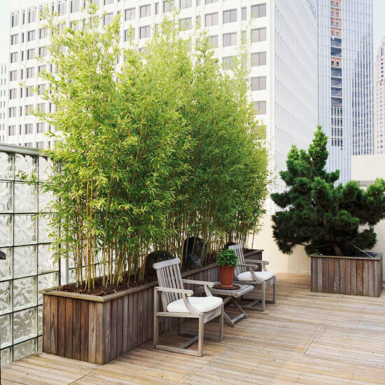 Long container planted with bamboos