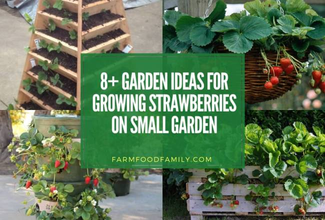 8+ Creative DIY Ideas for Growing Strawberries on Small...
