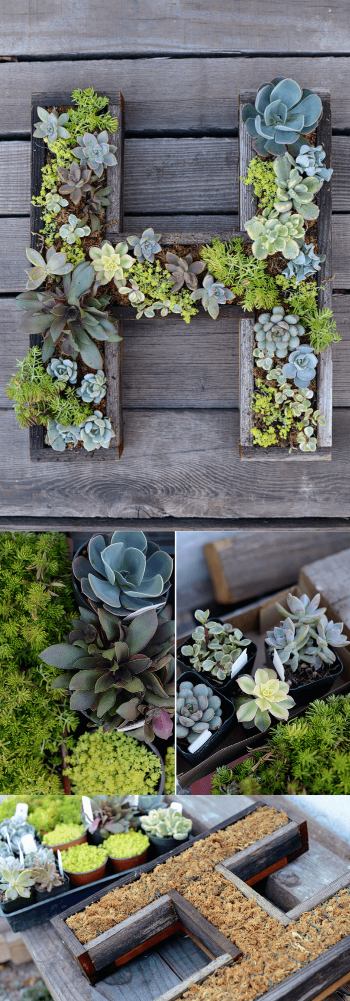 Wall-Mounted Succulent Letter DIY