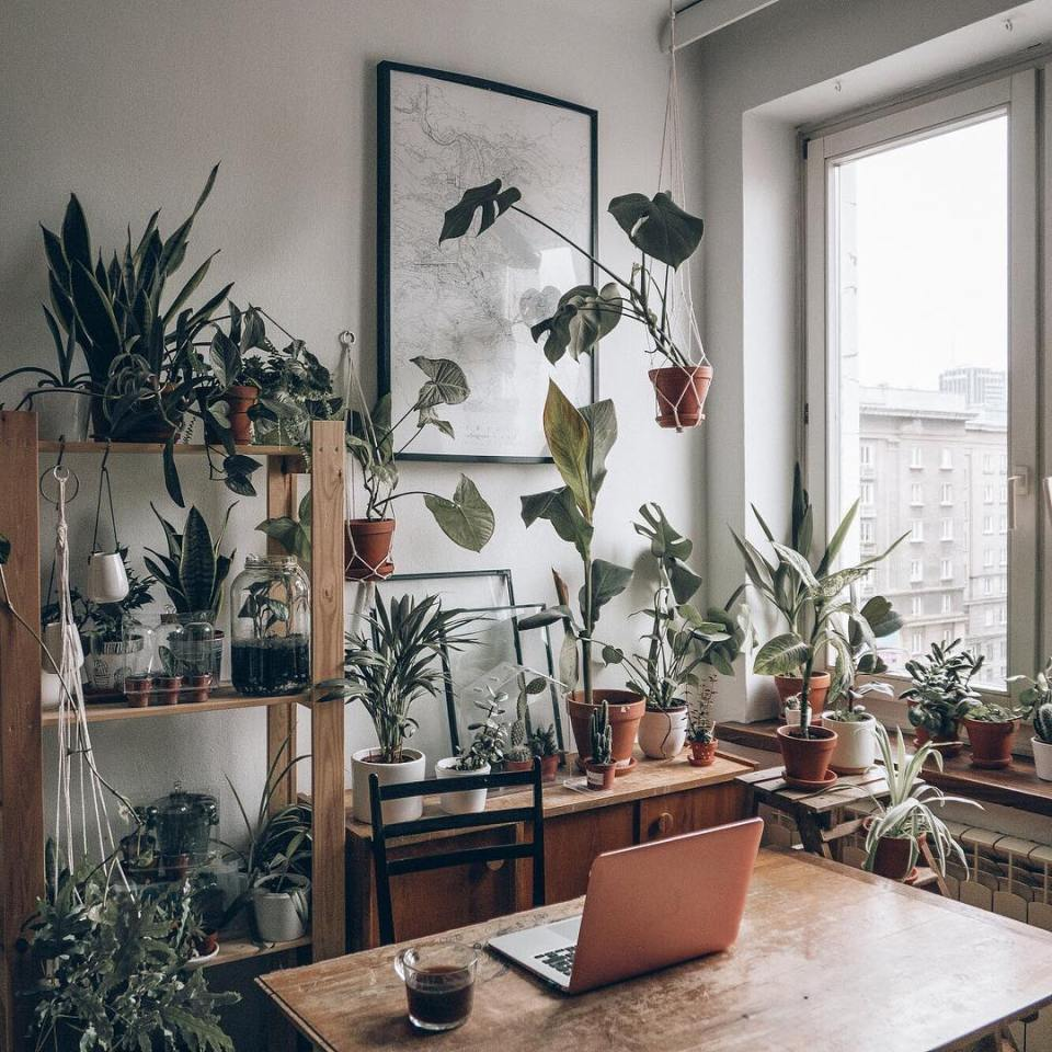 The ideal place for those who love plants