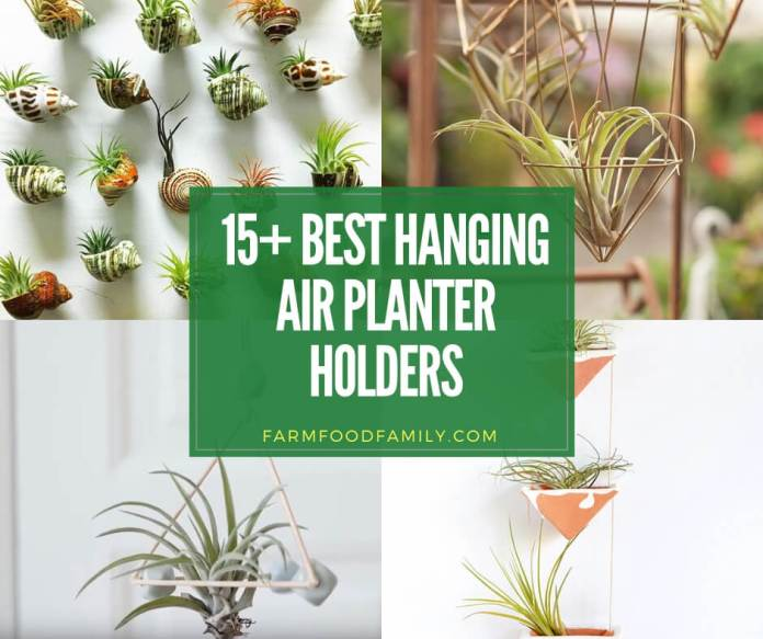 best hanging air plant holder ideas