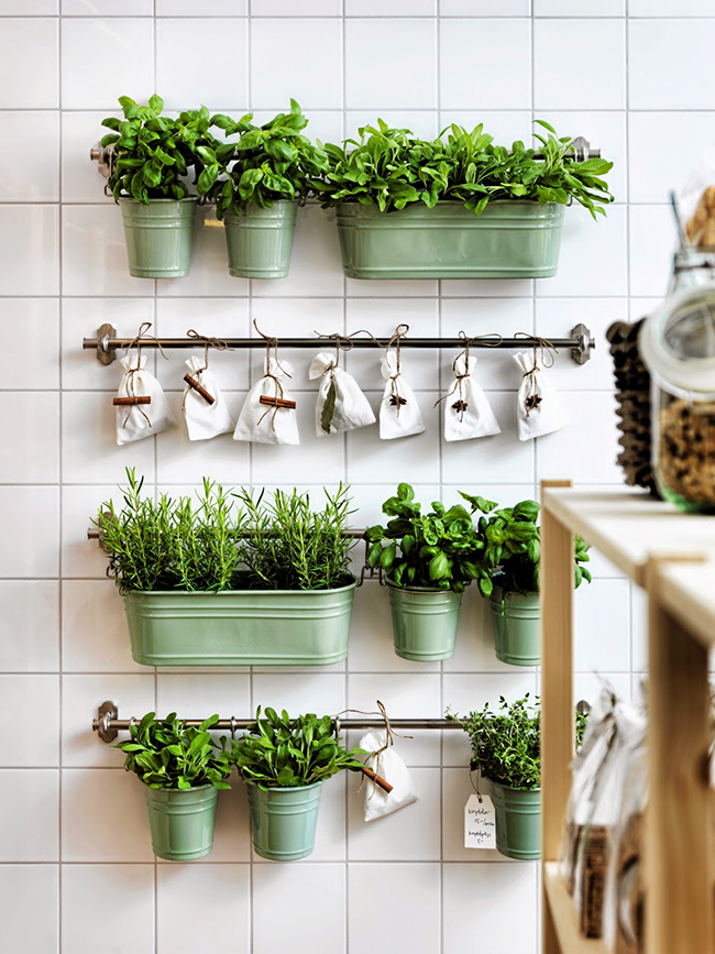 Wall planters in the kitchen