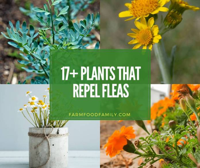 best plants that repel fleas