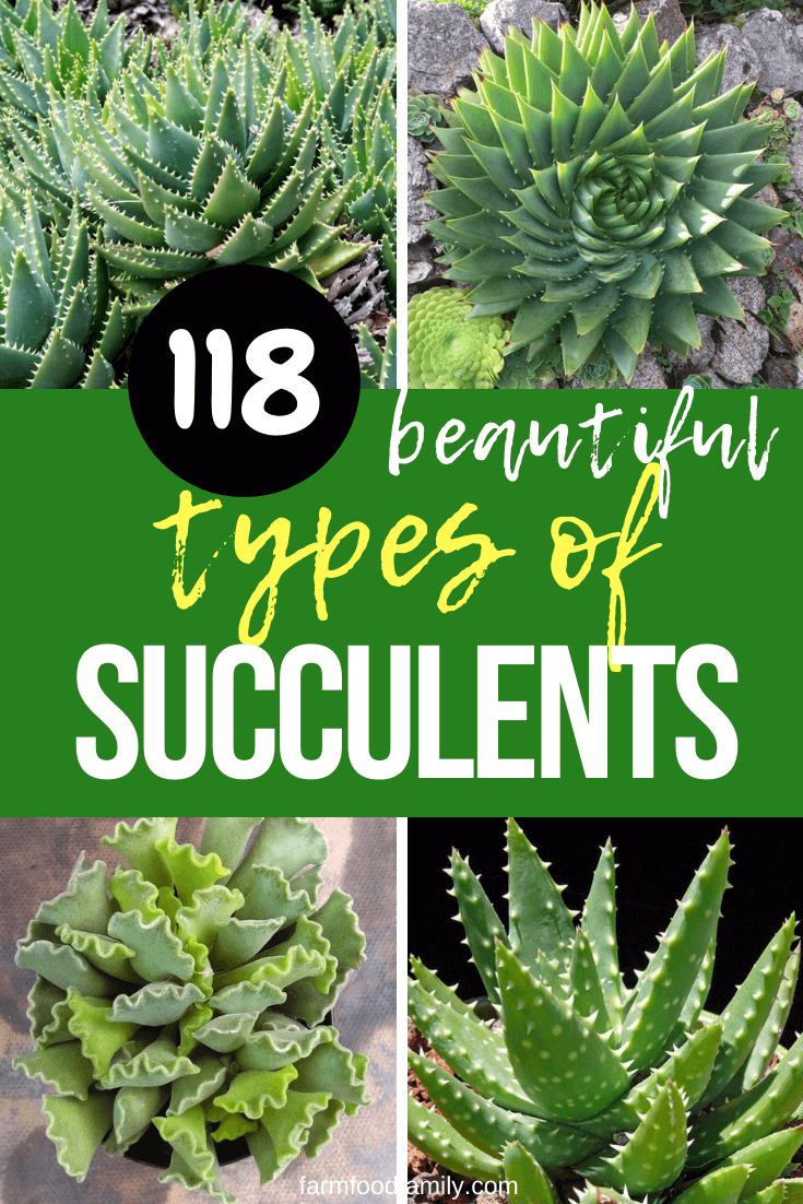 118 Different Types Of Succulents With Pictures Indoor Outdoor