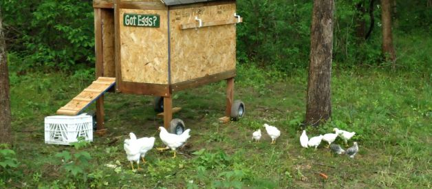 Build Your Own Chicken Coop