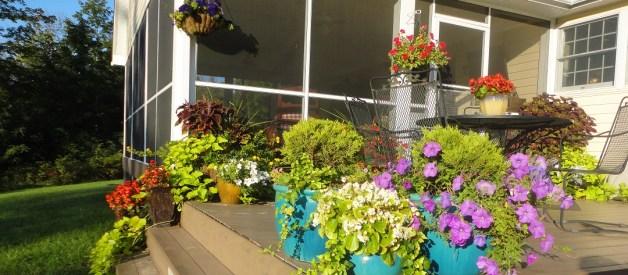Flower Pots in Fall
