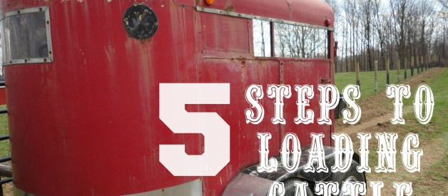 How To Load a Cow in 5 Easy Steps