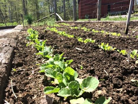 april garden1