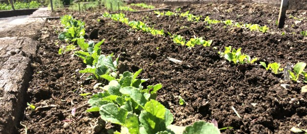 Seed Calendar – When to Plant Your Seeds!
