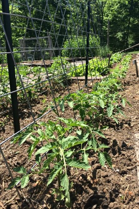 garden may 11