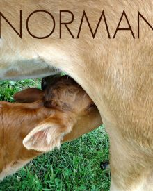 3 Things to Know About Bottle Feeding Calves – Meet Our Bottle Baby!