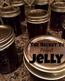 Perfect Jelly Every Time – The Secret You Must Know