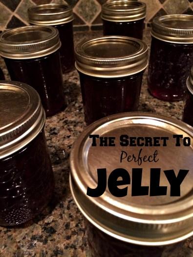 jelly 24