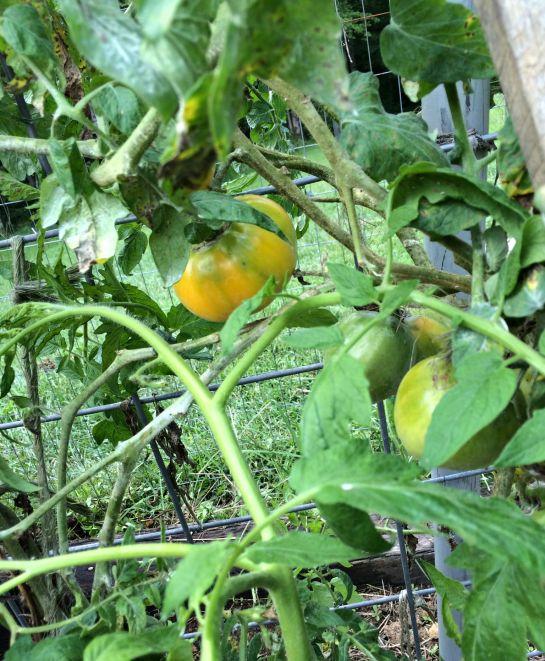 august garden 5