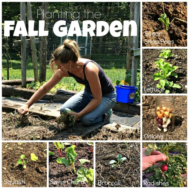 fall planting Collage