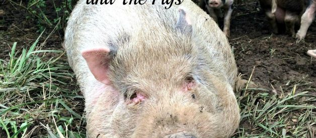 Raising Pigs Update:  Water, Fencing, Escaping, Hot Tubs, Swimming Pools and More Water